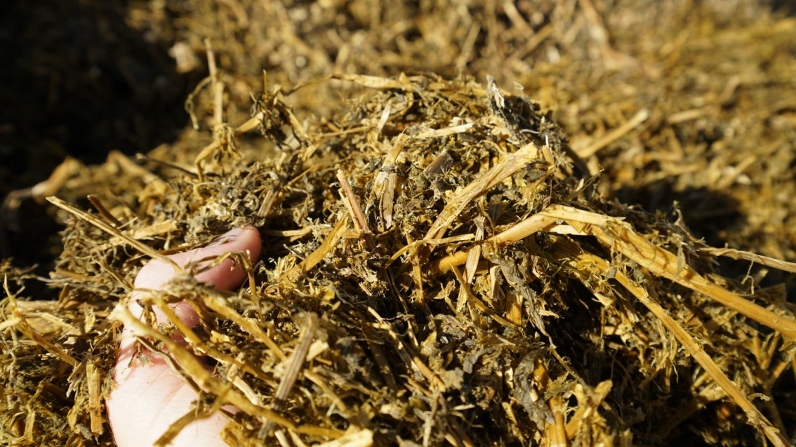 Forage Fibre the Key to Winter Feeding